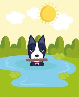 Cane in acqua con bastone