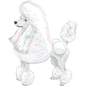 Cane bianco grand poodle razza in piedi