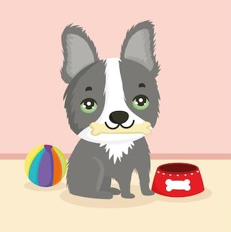 Cane con cibo e palla