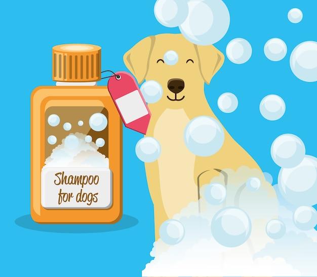 Cane con bottiglia di shampoo