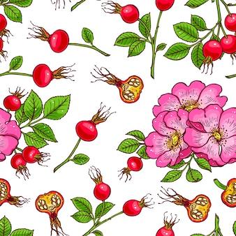 Modello di fiori e frutti di rosa canina