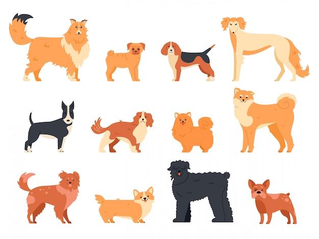Carattere di razza di cani. il pedigree del cane di razza, il carlino sveglio del cucciolo, il cane da lepre, il corgi gallese e il bull terrier, icone domestiche divertenti dell'illustrazione degli animali domestici hanno messo. compagno umano pacchetto animali del fumetto