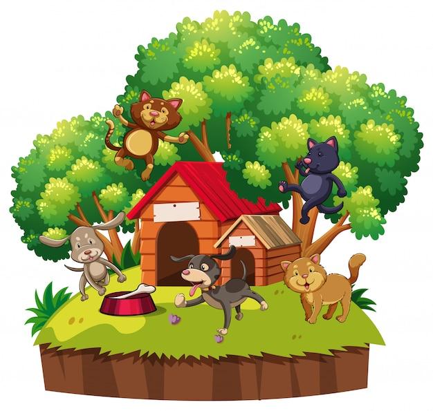 Cani e gatti al rifugio
