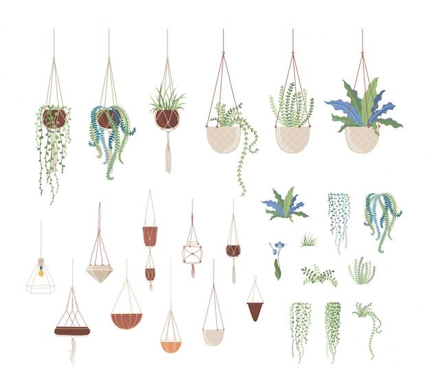 Set di illustrazioni piane di piante domestiche e vasi sospesi