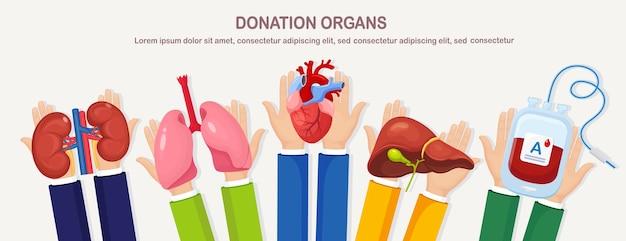 Organi di donazione. le mani del medico tengono i polmoni del donatore, il cuore, i reni della sacca di sangue del fegato per il trapianto. malattia digestiva epatica respiratoria cardiaca, cancro. aiuto volontario per il design piatto del paziente