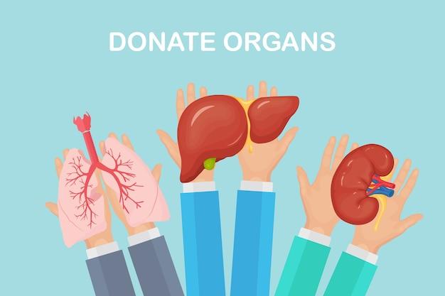 Organi di donazione. le mani dei medici tengono i polmoni, i reni e il fegato del donatore per il trapianto. aiuti volontari