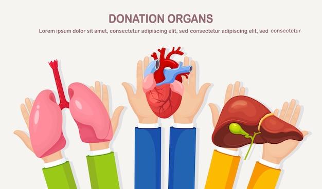 Organi di donazione. le mani tengono i polmoni, il cuore, il fegato del donatore per il trapianto. aiuto volontario per il paziente