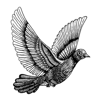 Illustrazione dell'incisione del piccione della colomba Vettore Premium