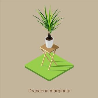 Arte vettoriale isometrica 3d di dracaena marginata.