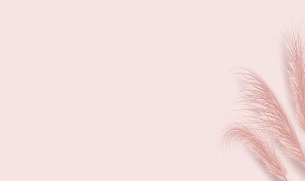 Erba di pampa naturale essiccata su sfondo rosa