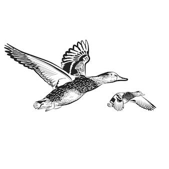 Anatra sullo sfondo bianco illustrazione vettoriale
