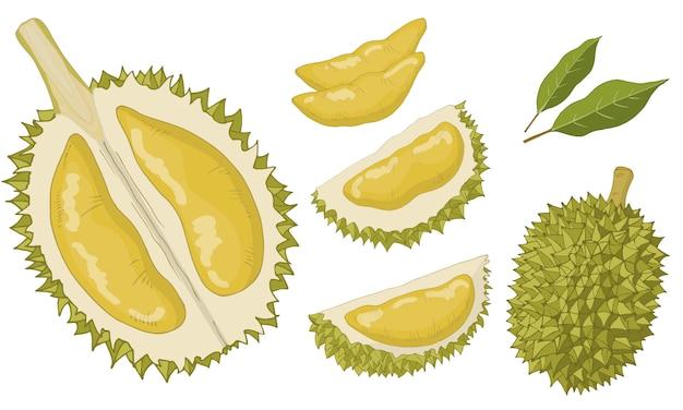 Durian set di oggetti isolati.