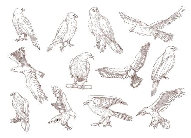 Schizzi disegnati a mano di uccelli aquila.