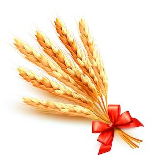 Spighe di grano con fiocco rosso isolato su bianco
