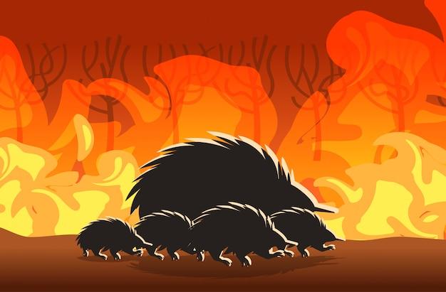 Siluette di echidna che corrono dagli incendi boschivi in australia animali che muoiono in incendi boschivi che bruciano gli alberi il disastro naturale concetto intenso arancione fiamme orizzontale