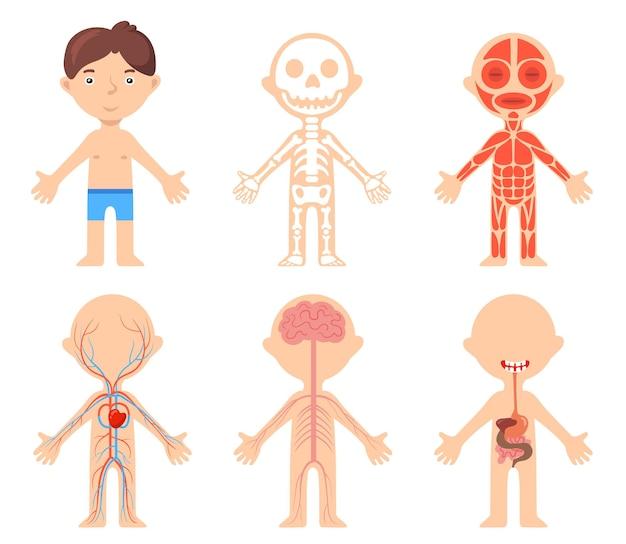 Poster educativo con ragazzo e sistemi anatomici del suo corpo. illustrazione vettoriale dei cartoni animati