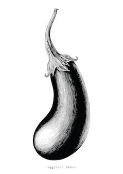 Illustrazione d'annata dell'incisione del disegno della mano della melanzana su fondo bianco
