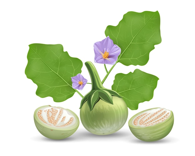 Vettore di melanzane, congedo e fiore viola, design realistico a metà taglio melanzana, isolato su priorità bassa bianca