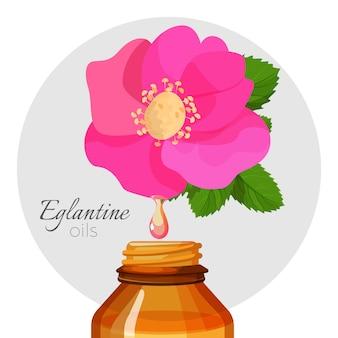 Oli di eglantin con fiore di rosa selvatica e bottiglia.