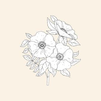 Elegante disegno botanico di bellissime rose canine che crescono sullo stelo con foglie.