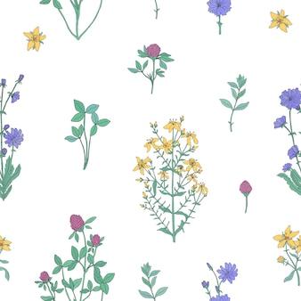 Modello senza cuciture botanico elegante con erbe fiorite su sfondo bianco.