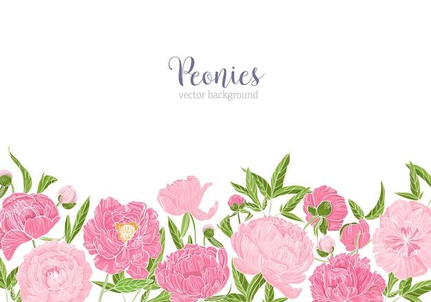 Elegante sfondo floreale decorato con bordo fatto di splendidi fiori di peonia sul bordo inferiore su bianco