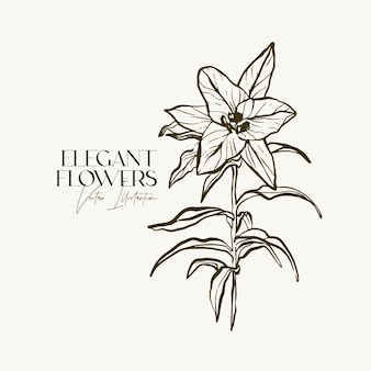 Elegante mano disegnare erbe o fiori di schizzo.