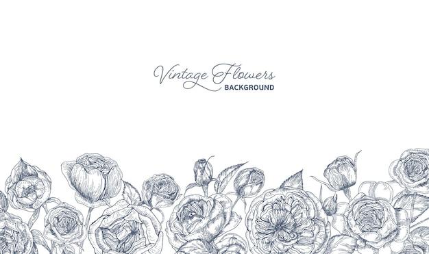 Elegante sfondo orizzontale decorato con austin o fiori di rosa inglese disegnati a mano con linee di contorno su bianco