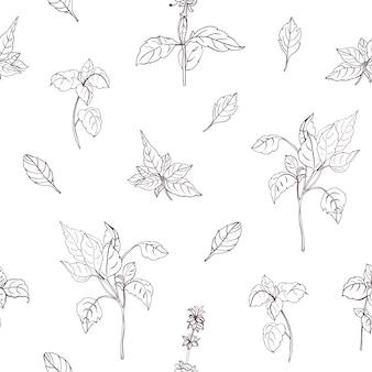 Il modello senza cuciture naturale elegante con il basilico lascia disegnato a mano con le linee di contorno su fondo bianco. sfondo con erbe aromatiche. illustrazione botanica per stampa tessile, carta da imballaggio.