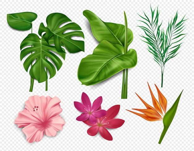 Elementi di fiori tropicali, foglie di palma, ibisco, loto isolato su sfondo trasparente
