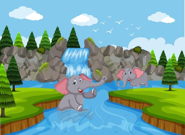 Elefanti che giocano in acqua