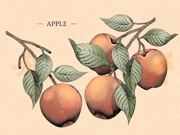 Incisione di mele con foglie, elementi naturali di frutta