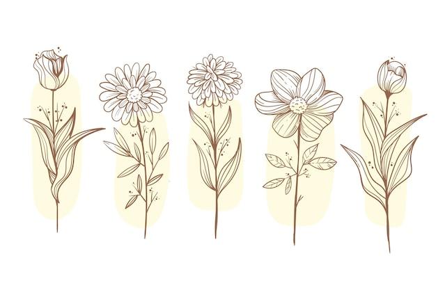 Incisione collezione di fiori disegnati a mano