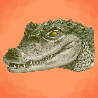 Illustrazione di incisione della testa di coccodrillo