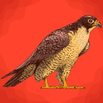 Illustrazione di incisione del falco in stile retrò