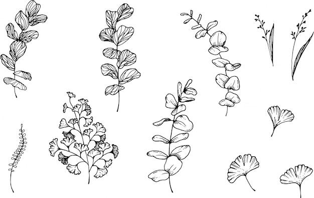 Eucalipto ed erbe disegnati a mano con la penna