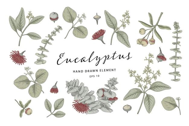Illustrazione disegnata a mano degli elementi botanici della pianta dell'eucalyptus