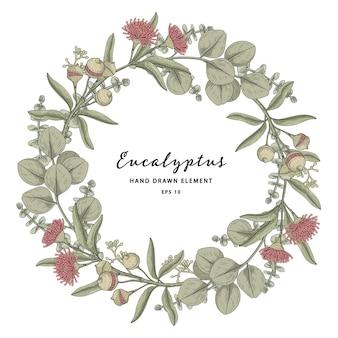 Illustrazione disegnata a mano della corona del telaio del cerchio della pianta di eucalipto