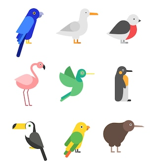Uccelli esotici in stile piatto. set di immagini stilizzate di animali uccelli colorati, pappagalli tropicali selvatici e calibri.