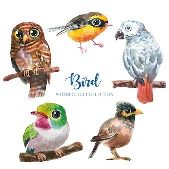 Insieme di raccolta dell'acquerello di uccelli colorati esotici