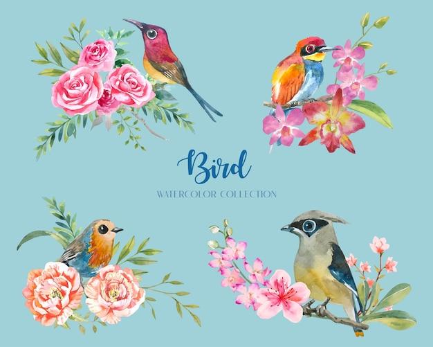 Uccello esotico colorato con raccolta di acquerelli di fiori e rami.