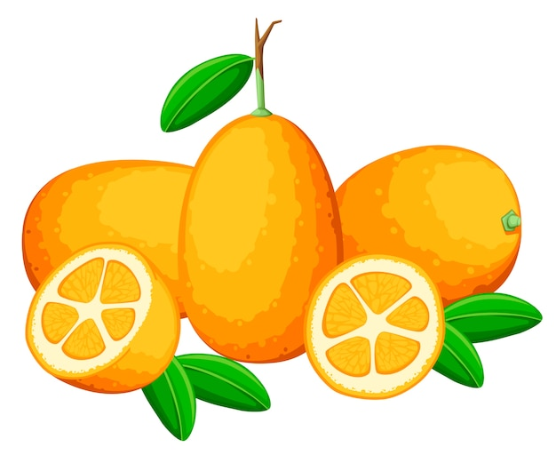 Kumquat di frutta esotica con foglie verdi. frutta fresca . illustrazione su sfondo bianco. kumquat intero e tagliato con succo d'arancia.