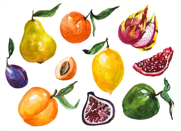 Insieme di illustrazioni dell'acquerello disegnato a mano di frutti esotici. mela e pera, prugna e melograno, agrumi su sfondo bianco. confezione di acquarelli di frutti tropicali in agrodolce denocciolati