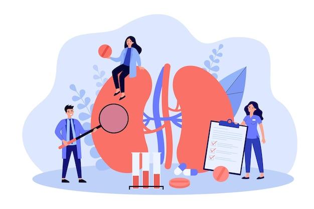 Piccoli medici esperti che esaminano l'illustrazione piana dell'illustrazione dei reni