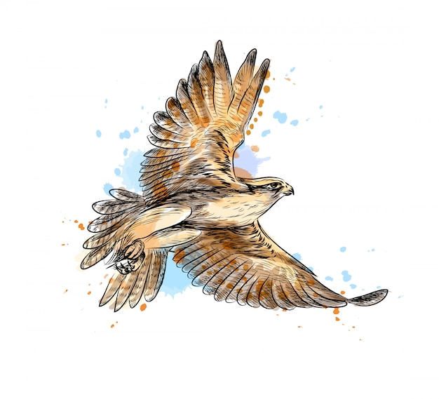 Falco in volo da una spruzzata di acquerello, schizzo disegnato a mano. illustrazione vettoriale di vernici