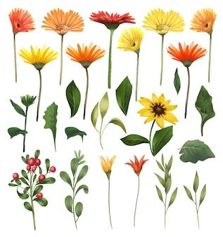Aster autunnali e fiori di gerber hanno isolato foglie verdi e rami set