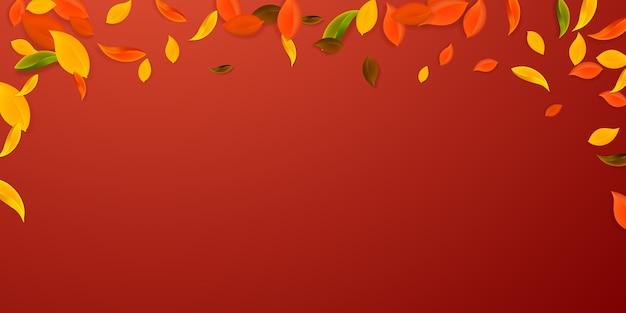 Foglie d'autunno che cadono. foglie caotiche rosse, gialle, verdi, marroni volanti. fogliame colorato pioggia che cade su sfondo rosso vivace. accattivante vendita di ritorno a scuola.