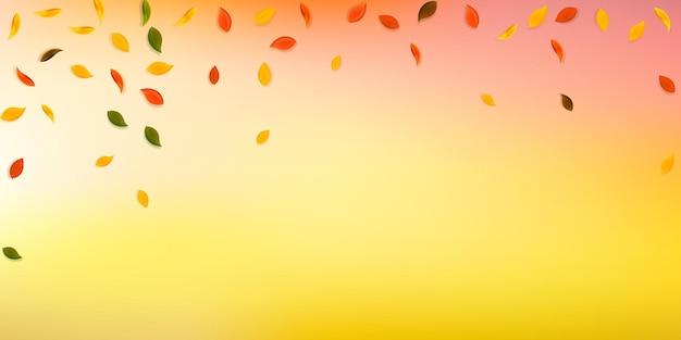 Foglie d'autunno che cadono. foglie casuali rosse, gialle, verdi, marroni che volano. fogliame variopinto di pioggia che cade su fondo bianco prezioso. accattivante vendita di ritorno a scuola.