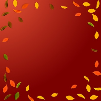 Foglie d'autunno che cadono. foglie casuali rosse, gialle, verdi, marroni che volano. vignetta fogliame colorato su sfondo rosso popolare. brillante ritorno a scuola in vendita.