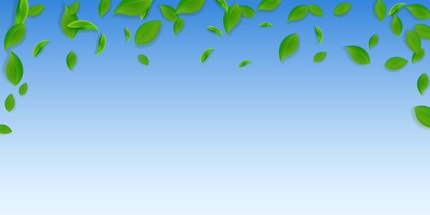 Foglie verdi che cadono. foglie caotiche di tè fresco che volano.